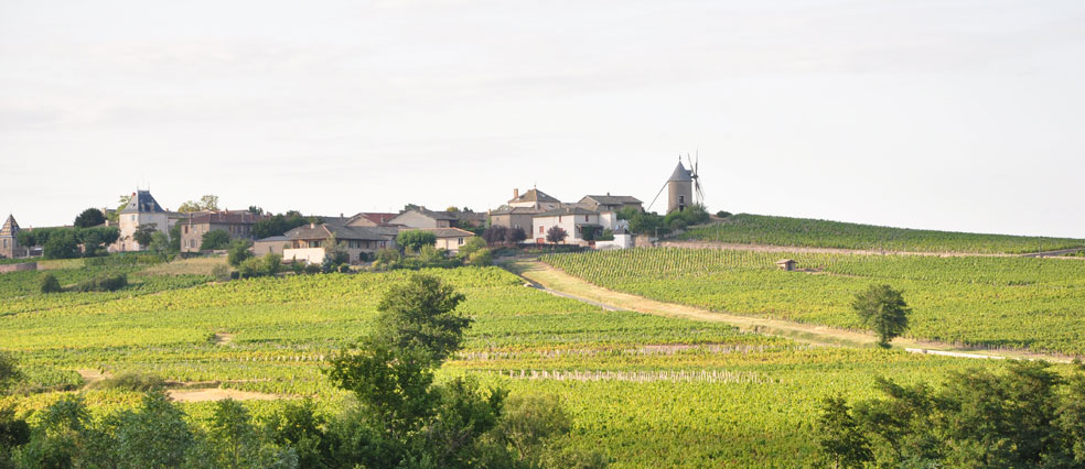 Domaine Richard Rottiers